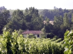bordeaux vineyards 2